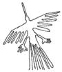 Nasucakondori